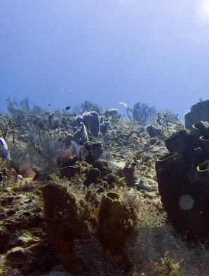 Dive sites in cozumel - Cozumel dive sites ...