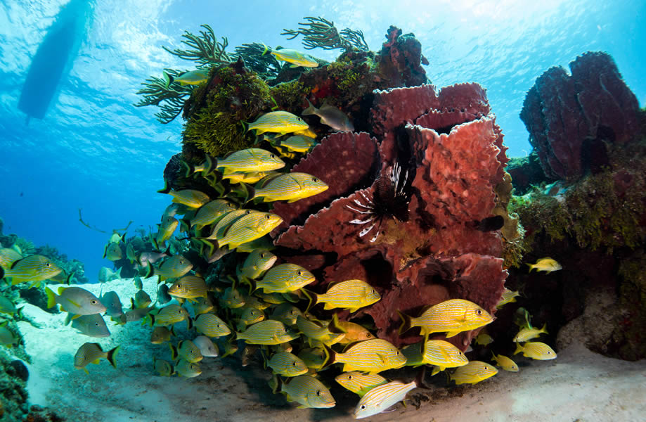 Come explore the magnificent reefs